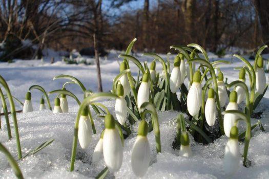 СвоеОбразная Весна.